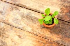 Planta nova com flowerpot pequeno imagens de stock