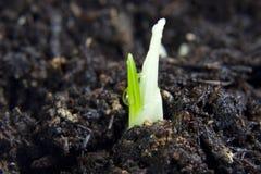 Planta nova com gota da água Foto de Stock Royalty Free