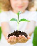 Planta nova contra o fundo verde fotografia de stock royalty free
