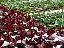 Planta nova da flor foto de stock royalty free