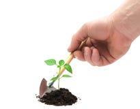 Planta nova e mão foto de stock royalty free