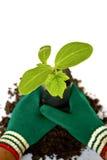 Planta nova em plantar o saco no solo Fotos de Stock Royalty Free