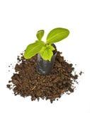 Planta nova em plantar o saco no solo Fotografia de Stock Royalty Free