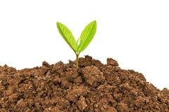 Planta nova isolada no fundo branco Imagem de Stock Royalty Free