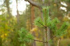 Planta nova na floresta Imagens de Stock