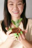 Planta nova na mão da mulher Imagem de Stock Royalty Free