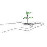 Planta nova na palma de uma ilustração do esboço da mão Imagens de Stock Royalty Free
