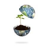 Planta nova na terra isolada (elementos de Fotos de Stock