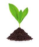 Planta nova na terra isolada no branco Foto de Stock Royalty Free