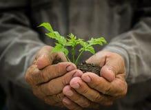 Planta nova nas mãos Fotografia de Stock