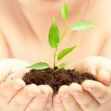 Planta nova nas mãos da pessoa Imagem de Stock Royalty Free