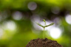 Planta nova no fundo da natureza Fotografia de Stock