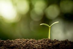 Planta nova que cresce no solo Fotografia de Stock Royalty Free