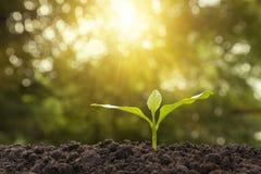 Planta nova verde que cresce no solo no fundo da natureza Imagens de Stock