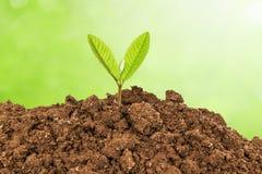 Planta nova - vida nova que cresce na mola Imagens de Stock