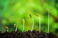 Planta-nueva vida Imagen de archivo libre de regalías