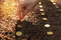 Planta- och besparingbegrepp vid den mänskliga handen, människa som kärnar ur mynt Arkivbilder