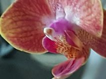 Planta Orchidee verde selvagem de Grern imagem de stock royalty free
