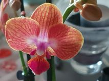 Planta Orchidee verde selvagem de Grern imagens de stock