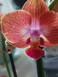 Planta Orchidee verde selvagem de Grern fotografia de stock