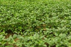 Planta orgânica Fotos de Stock