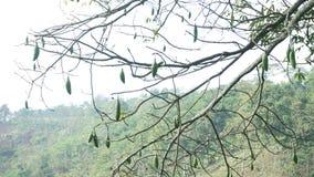 Planta original Imagem de Stock
