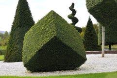 Planta ornamental con la poda artística Fotografía de archivo