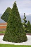 Planta ornamental con la poda artística Fotografía de archivo libre de regalías