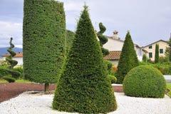 Planta ornamental con la poda artística Imagen de archivo