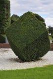 Planta ornamental con la poda artística Fotos de archivo libres de regalías