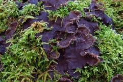 Planta púrpura Foto de archivo