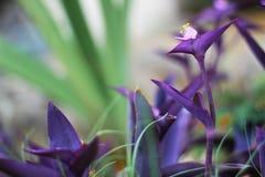 Planta púrpura hermosa imagen de archivo