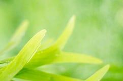 Planta para el fondo. Imagen de archivo libre de regalías