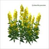 Planta para la cama de flor Imagenes de archivo