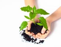 Planta pequena colocada nas mãos da criança Fotos de Stock Royalty Free