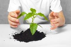 Planta pequena colocada nas mãos da criança Foto de Stock
