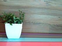 Planta pequena com fundo de madeira fotografia de stock royalty free