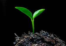 Planta pequena da árvore Imagem de Stock