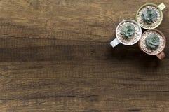 Planta pequena da vista superior em uns potenciômetros pasteis no fundo de madeira fotografia de stock