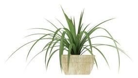 Planta pequena do Pandanus ilustração stock