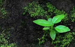 Planta pequena em uma parede velha Fotos de Stock Royalty Free
