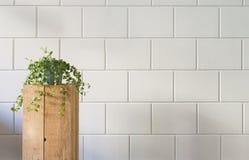 Planta pequena na coluna de madeira contra a parede de tijolos branca Imagens de Stock Royalty Free
