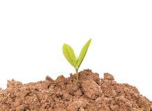 Planta pequena na pilha do solo Fotos de Stock