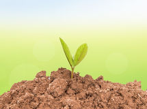 Planta pequena na pilha do solo Foto de Stock