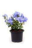Planta pequena no plantador fotografia de stock