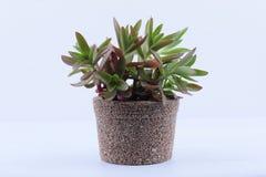 Planta pequena, objeto da árvore Fotos de Stock