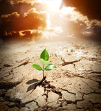 Planta pequena que cresce na terra árida imagens de stock royalty free