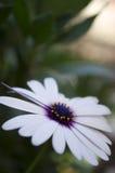 Planta pequena, selvagem Fotografia de Stock Royalty Free