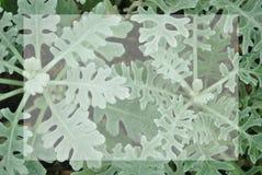 A planta pequena verde do close up com quadro branco no centro para o texto, dá o sentimento reconfortante Foto de Stock