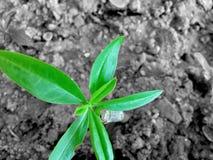 Planta pequena verde no fundo preto e branco foto de stock
